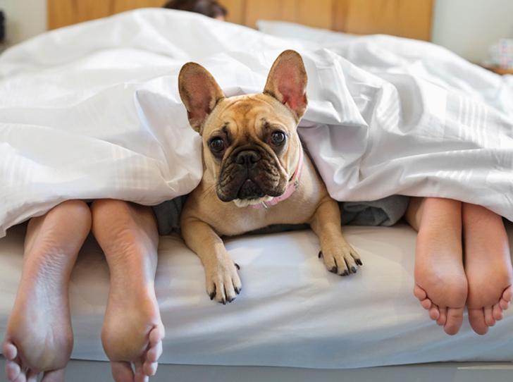 Фото №3 - Как избавиться от аллергенов в спальне