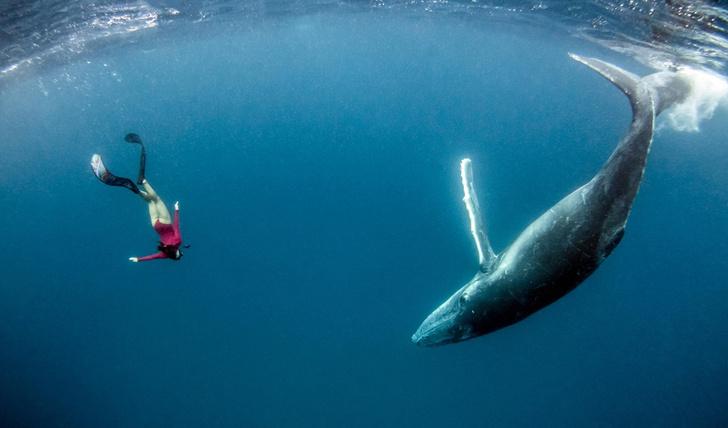 Фото №1 - Погружение с китом