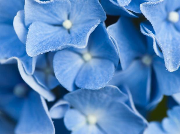 Фото №3 - Интересные факты о цвете