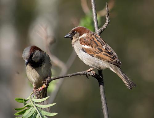 Фото №1 - Сколько калорий необходимо птицам?