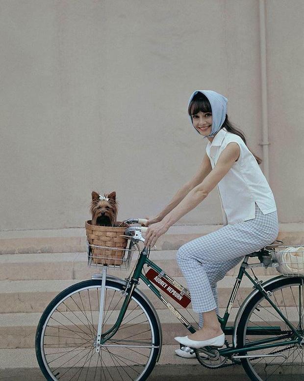 Фото №1 - Дизайнерские велосипеды и аксессуары