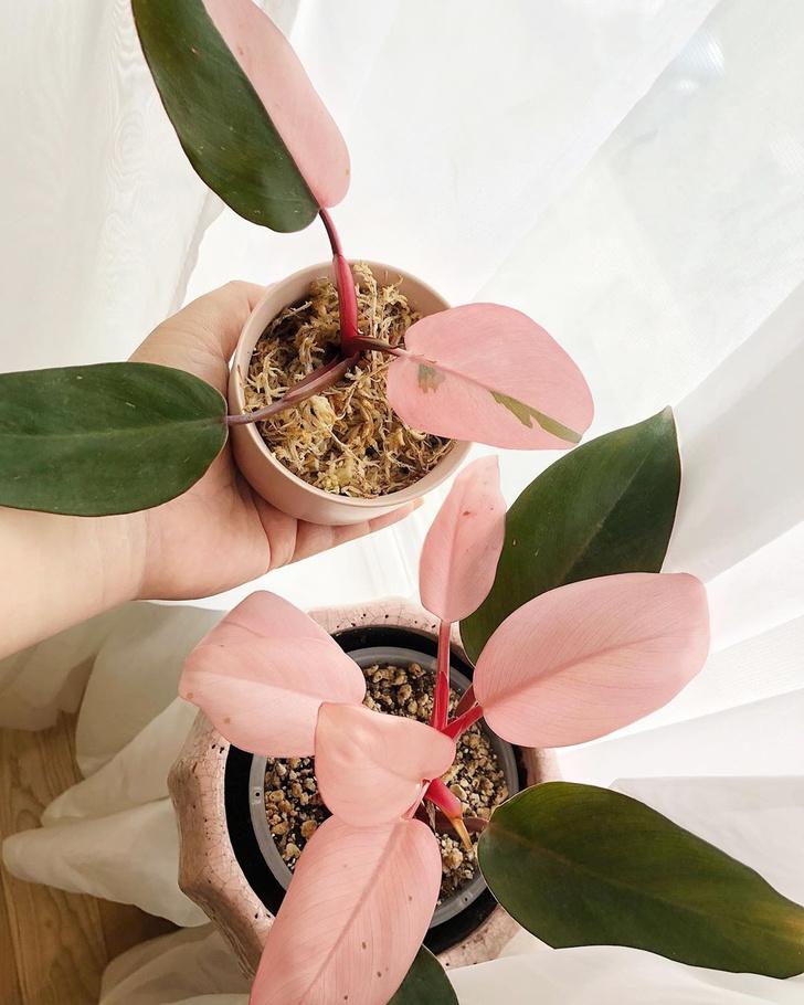 Фото №1 - Тренды 2020: самые модные комнатные растения