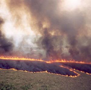 Фото №1 - Лесные пожары в Калифорнии