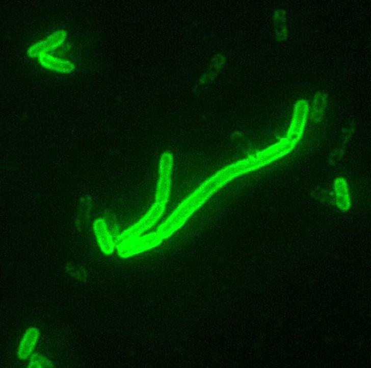 Фото №1 - В Монголии зафиксировали вспышку бубонной чумы