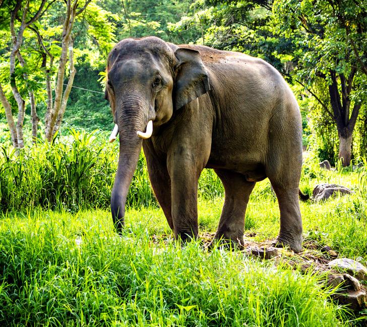 Фото №10 - 11 самых старых существ на Земле
