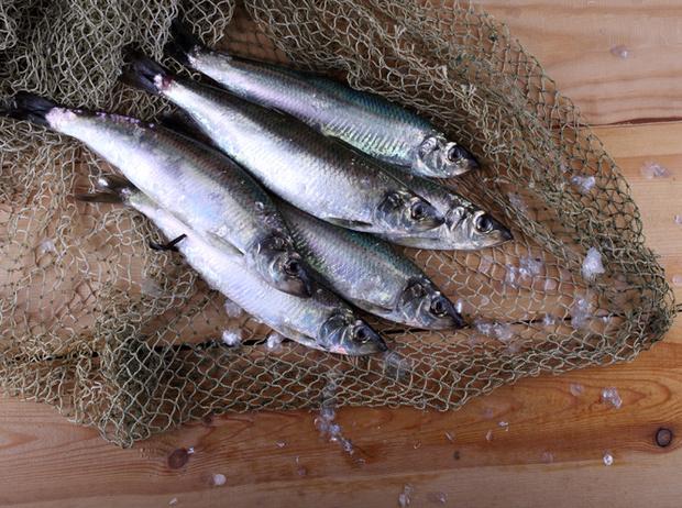 Фото №2 - Можно ли есть российскую рыбу (и если да, то какую)