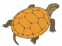 Фото №1 - Почему панцирь черепахи состоит из шестиугольников?