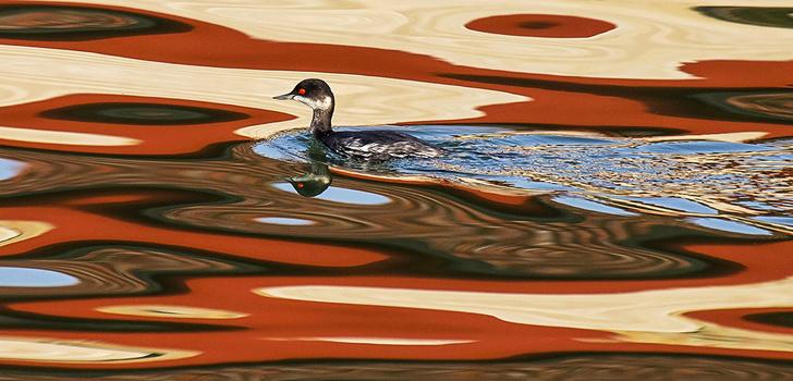 Фото №1 - Птица в акварели