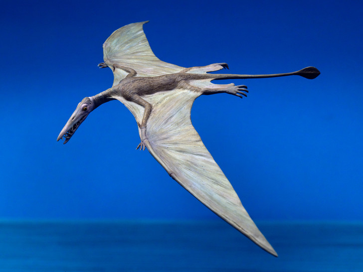 Фото №1 - В пустыне Атакама обнаружены останки птерозавра