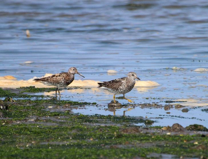 Фото №1 - В России замечен новый вид птиц
