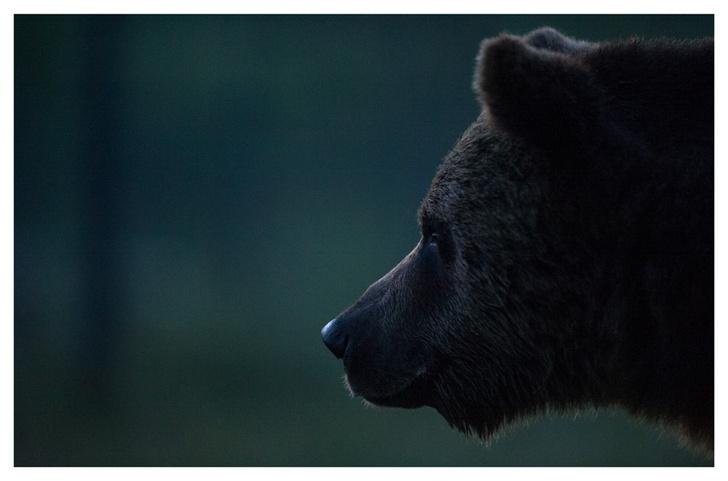 Фото №1 - Лесные истории