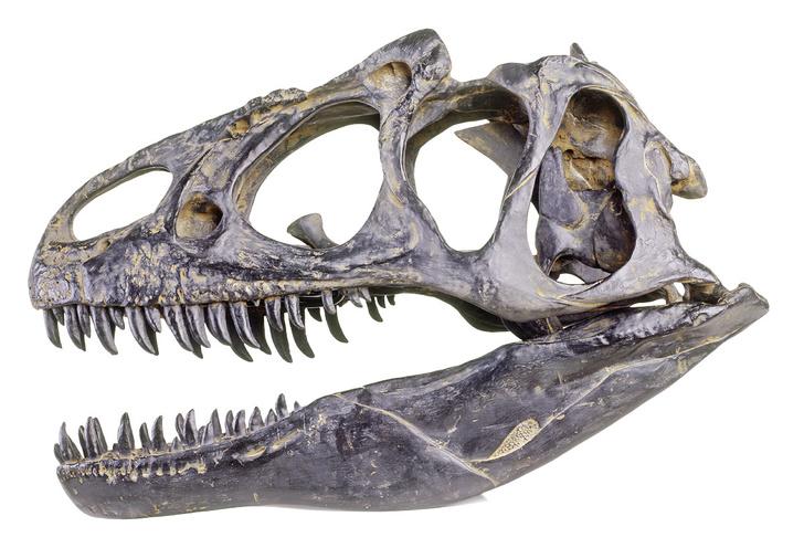 Фото №6 - Твердые улики: как ученые восстанавливают облик давно вымерших животных