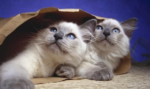 Фото №1 - Изображения котят и щенят заметно повышают производительность труда