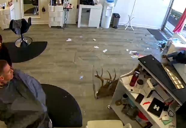 Фото №1 - В США дикий олень разнес парикмахерскую и украл выпрямитель для волос (видео)