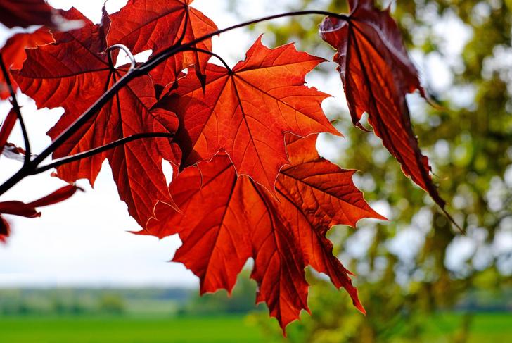 Фото №1 - Назван вид деревьев, лучше всего защищающий от УФ-лучей