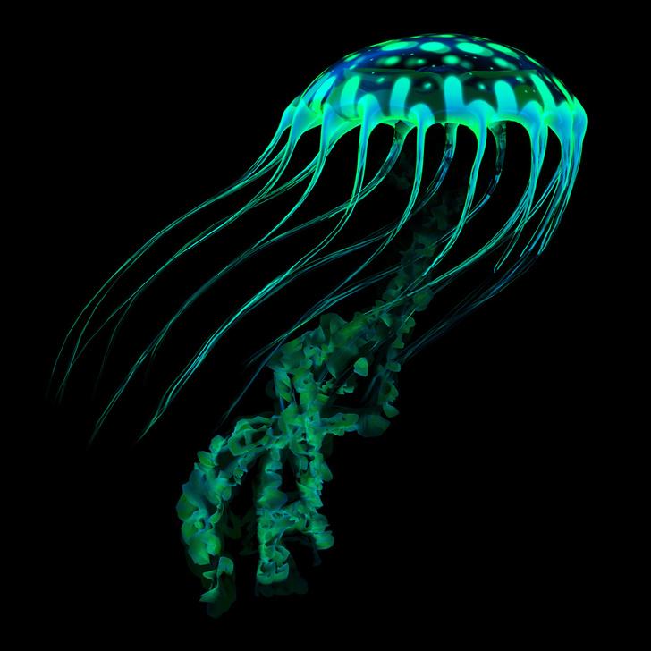 Фото №16 - Природный прототип: животные, подсказавшие идеи создателям космического оборудования