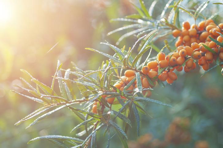 Фото №2 - Витамин С – самый вкусный витамин