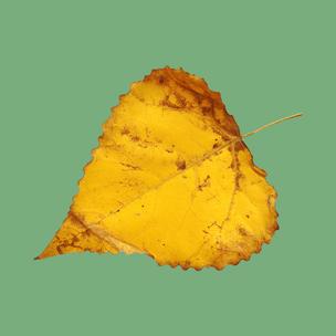 Фото №3 - Тест: Выбери осенний листок и узнай, с чем тебе придется расстаться в сентябре 🍂