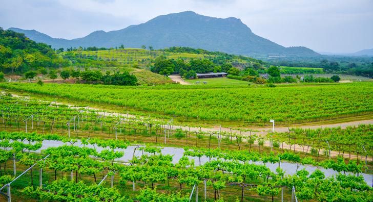 Фото №1 - То в жар, то в холод: 5 необычных мест, где делают вино