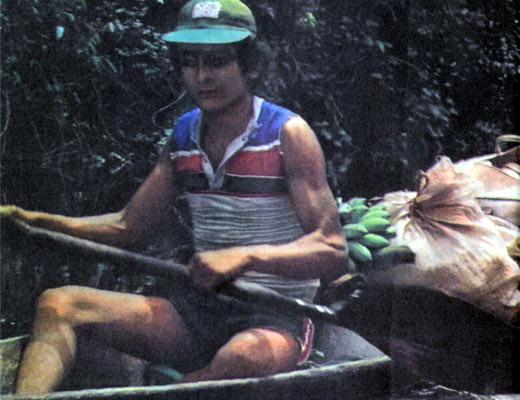 Фото №1 - Амазонские коробейники