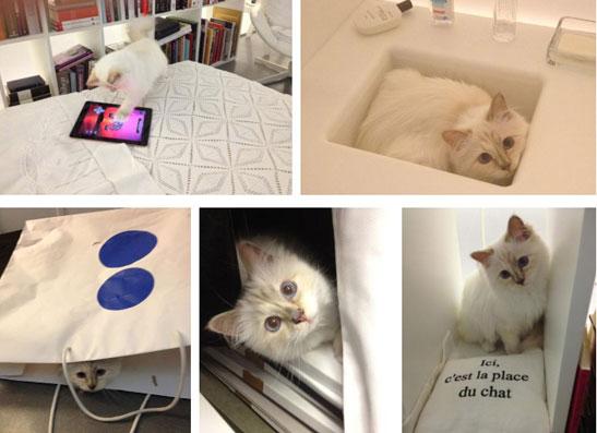 Фото №1 - Карл Лагерфельд рассказал о любимой кошке Шупетт