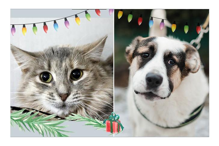 Фото №1 - Новогодний котопёс: кошка Энджи и щенок Беляш