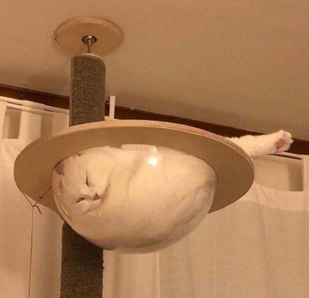Фото №1 - 40 фотосвидетельств, что коты могут спать где угодно и когда угодно