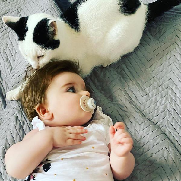 Фото №1 - Нежнее нежного: 40 котиков, которые обожают младенцев