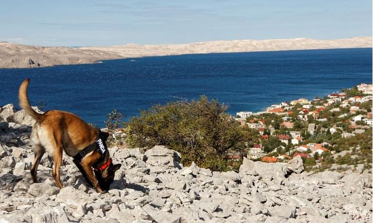 Фото №1 - В Хорватии появились хвостатые археологи