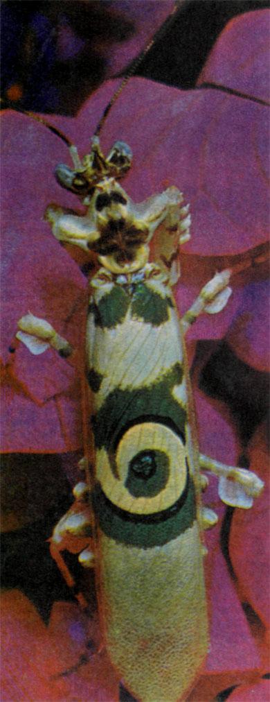 Фото №4 - Дом для бабочки