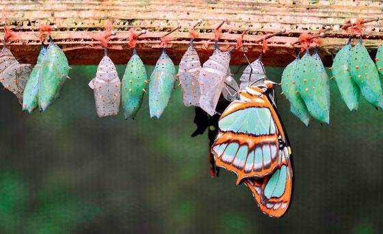 Фото №10 - Полет фантазии: репортаж с фермы бабочек в Малайзии
