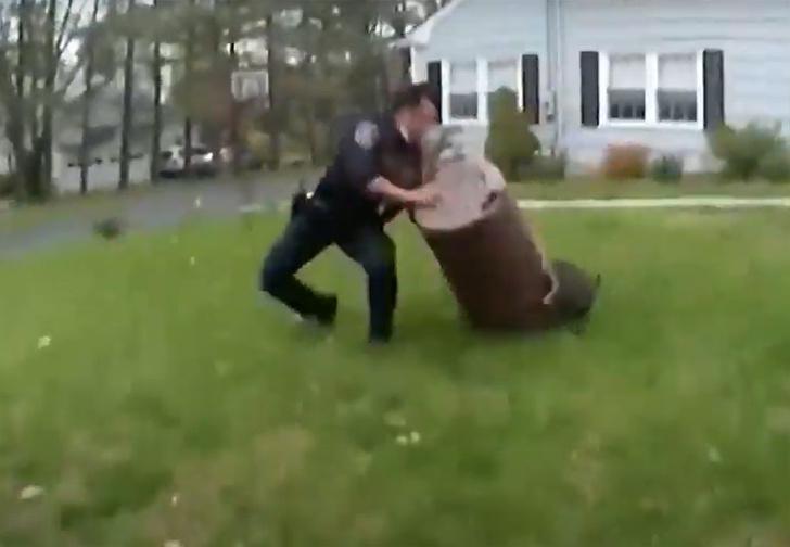 Фото №1 - Полицейские 45 минут пытались поймать беглого поросенка, и это погоня века (видео)