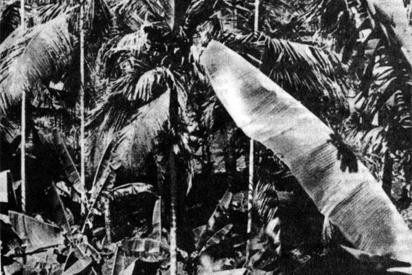 Фото №1 - В джунглях древнего Вайнада