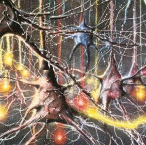 Фото №1 - Не грубите нервным клеткам