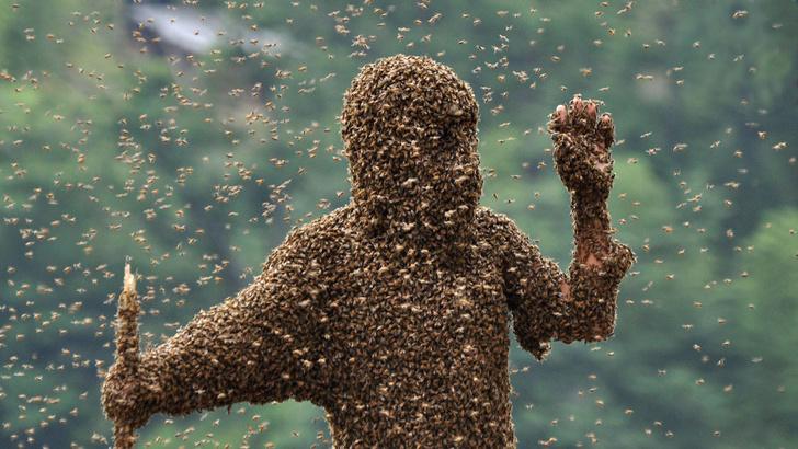 Фото №4 - Термитовый апокалипсис, восстание саранчи и еще 3 жутких нашествия насекомых