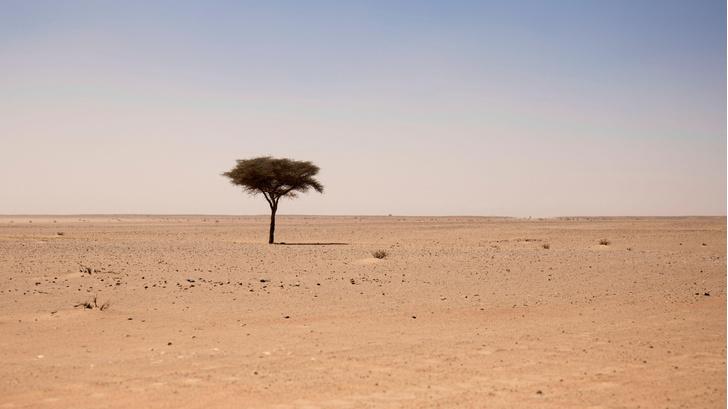 Фото №1 - Ученые подсчитали количество деревьев в Сахаре