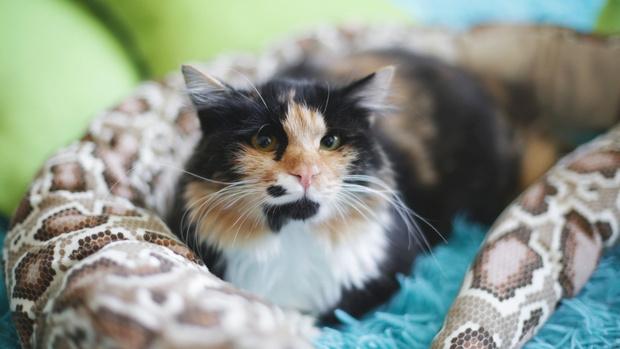 Фото №2 - Котопёс недели: возьми из приюта кошку Кармелиту или пса Милана