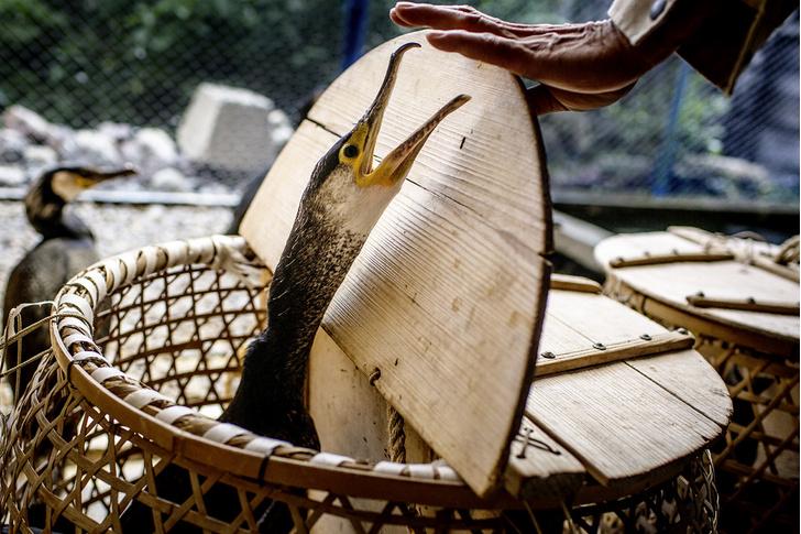 Фото №1 - Традиции: у мацури, Япония