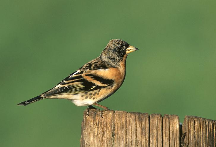 Фото №1 - Птицы научились использовать окурки