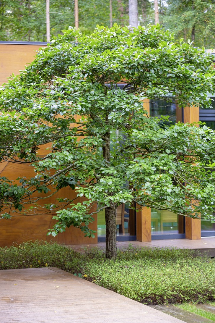 Фото №5 - Частный сад на Финском заливе по проекту бюро «Мох»