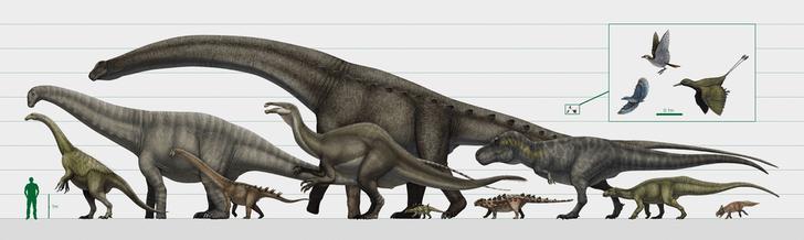 Фото №1 - Ученые оценили вес тираннозавра