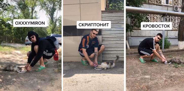 Фото №1 - Видео блогера, покормившего уличных котов «в стиле русских рэперов», стало вирусным