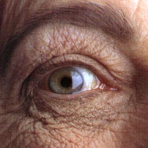 Фото №1 - Стволовые клетки помогут вылечить слепоту