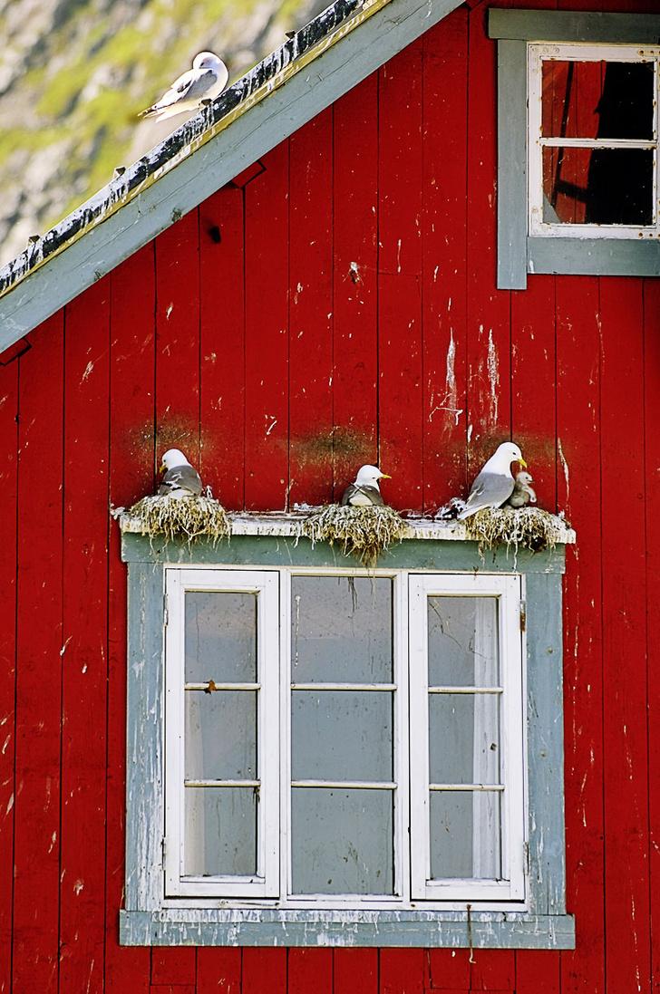 Фото №5 - Норвегия: рыбацкие сети