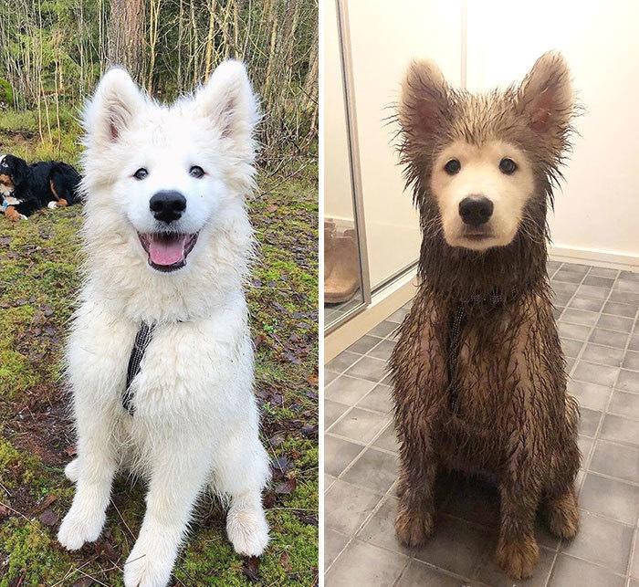 Фото №1 - 30 фотографий, доказывающих идеальную совместимость собак и грязных луж