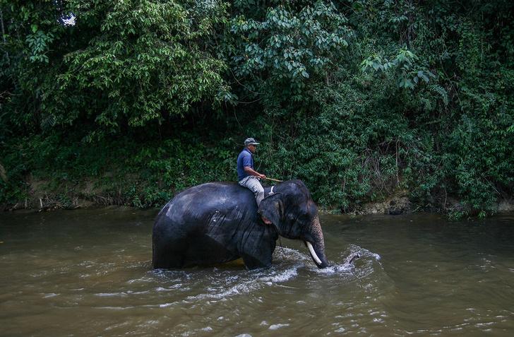 Фото №1 - Верхом на слоне