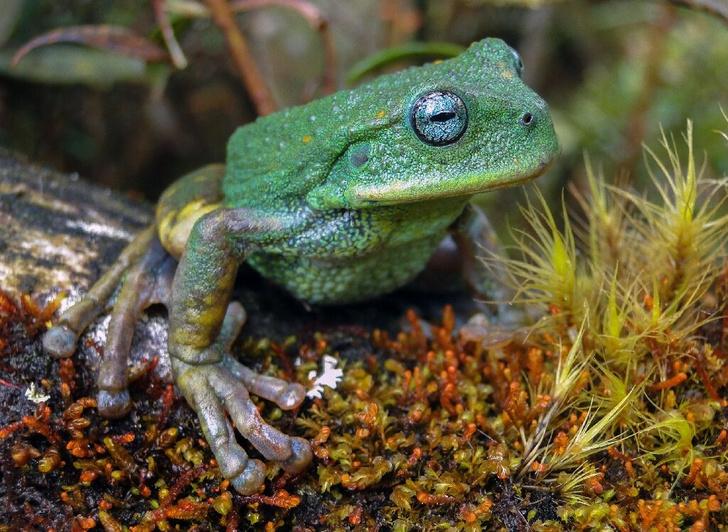 Фото №1 - В Южной Америке обнаружен новый вид животных