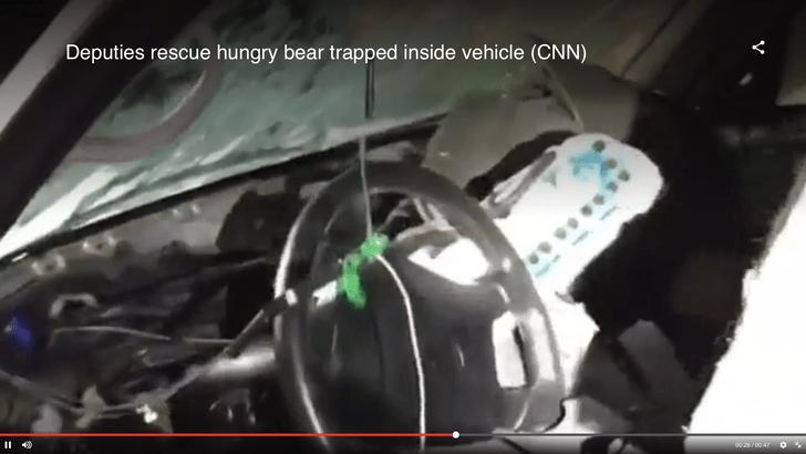 Фото №1 - В США медведь заперся в машине и разнес салон (видео)