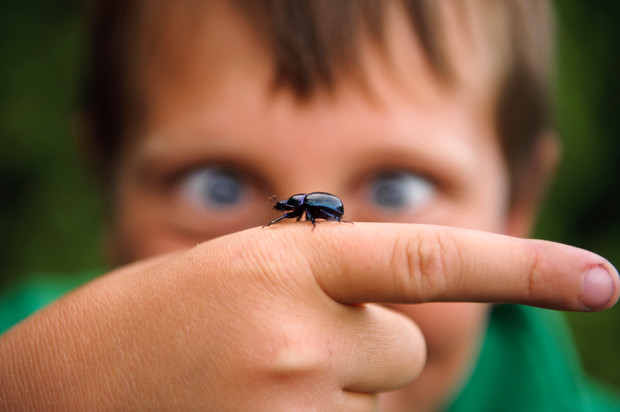 Ребенок убивает насекомых психология