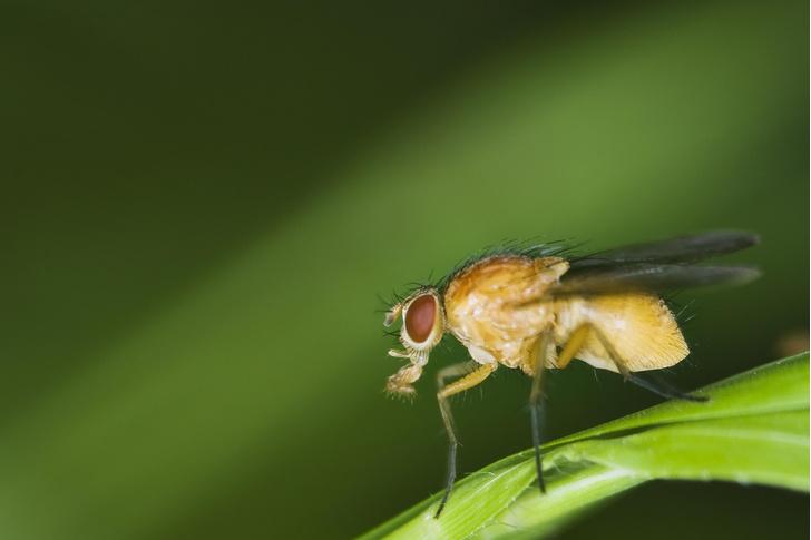 Фото №1 - Ученые стерли память насекомому, избавив от травмирующих воспоминаний